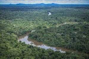 De Acordo com Pesquisa, Amazônia Absorve Menos Gás Carbônico do que Deveria