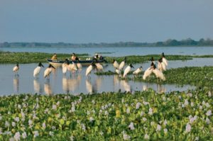 Pantanal Matogrossense: A Show of Colors in the Open Horizon