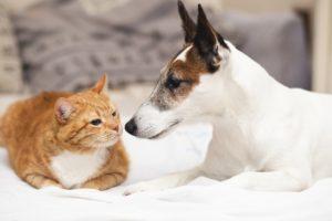 Estudo Sugere que Cães e Gatos Podem Contrair Coronavírus, mas Não Transmitem a Humanos