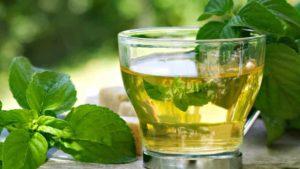 Exagerou na Ceia de Natal? Chá de Boldo é a Cura Natural para Problemas Digestivos