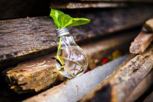 Sustentabilidade em Casa: 5 Atitudes que Ajudam Nosso Planeta e Devem Partir de Você